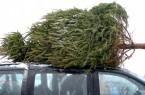Christmas Tree on Car